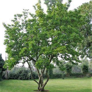 Baumschutzzaun