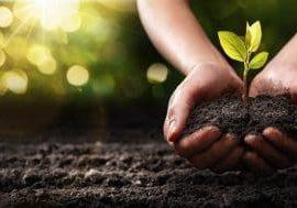 haende_halten_pflanze